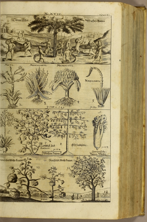 [top] Canarische Wasser-Baum [upper middle] Metl Mexcalmetl Mexocotl Nequeametl [lower middle] Caraguata Guacu West Ind. [&] Ost Indische Aminii Javanische Baum-Molle [bottom] Sinisches Wolle-traut Sinische Woole-Baum