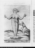 [Do monstro marinho que se maton na capitania de Sam Vicente no anno de 1564]