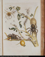 [Spiders, ants, bird, and guava]