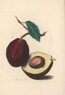 Avocado Pear.