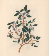 No. III. The Guaiacum; or Lignum vitae. Well known for its useful and Medicinal Qualities.