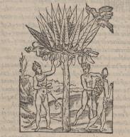 [D'un arbre nommé Paquouere.]