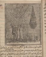 [Guava or guayacan (?), cactus (?), and a man ]