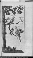 [Parrots]