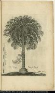 The Yonge Palmeto Royall