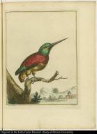 [Kingfisher]