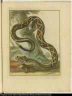 [Rattlesnake]
