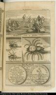 Krancker-Kür in Florida; Persianische Spinne.; Americanische Spinne.; ...