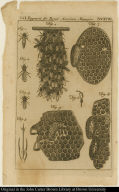 [The manner that Bees take their repose, &c.]