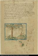 arbre apelle cacaul