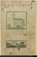 [top] [Llama] [bottom] [Stag, hind or roebuck, fox, and wild boar]