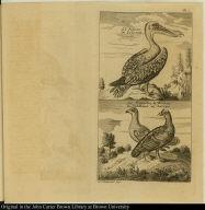 [top] Le Pelican. De Pelicaan [bottom] Le Francolin & Perdrix. De Veldhaan en Patrys.