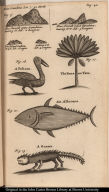 [Profiles of mountains, banana palm, a pelican, an albacore tuna, and an iguana]