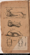 [Hare or rabbit, duck, and goose prepared for roasting]