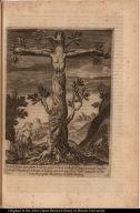 Vera Efigies cuiusdam Arboris, quoe in hunc modum et figura[m] crucis, et Crucifixi creuisse inventa est in Regno Chilensi in America, ubi in valle Limache colitur magna populi devotione ab anno d[omi]ni 1634