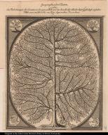 Geographischer Baum, welcher die Besitzungen der Jesuiten in der ganzen Welt, und die Anzahl aller Glieder dieser Geselschaft vorstellet.