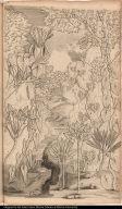 [Colocasia hederacea...latifolia; Colocasia hederacea...laciniata; Colocasia hederacea...angusti-folia; Colocasia hederacea...folio cordato]