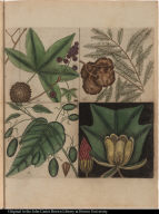 [Cypress, sweet gum, tulip, and tupelo tree.]