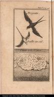 [top] Fregatte.; Paille en cul. [bottom] Petite Isle D'aves.