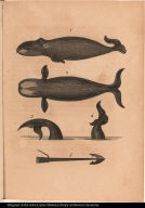 [Whales and harpoon]