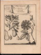 1. Aguacate Avorat ou Persea 2. Granadille Fleur de la Passion