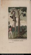 Il Capit[an]o. Stedman fa Scorticare il Serpente Aboma.