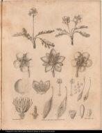 [Arctic flowers]
