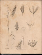 [Arctic plant]
