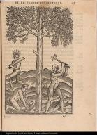 [... le bois du Bresil trouué, auec plusierus autres arbres non veuz ailleurs qu'en ce païs.]
