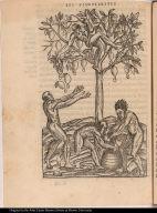 [... d'vn arbre nommé Acaïou.]