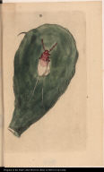[Cactus and cochineal]