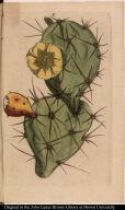 [Cactus]