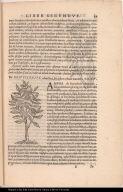 De Hoitziloxitl Anethina, seu arbore refinam manante.