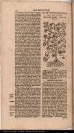 Indianische Kresse. Nasturtium Indicum.
