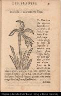 Narcissus Indicus rubro flore.