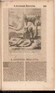 P. Antonius Bellavia Siculus Soc: Iesu, odio Sacramentalis Confessionis sublatus ab Haereticis in Brasilia ad Pernambucum. 4 Augusti A. 1633.
