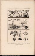 1. Graines Employées pour les Colliers. 2. Végétaux pour le Tatouage 3. Plantes Nutritives.