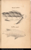 [top] Tortuë de Mer. [bottom] Poisson armé.