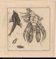 [Crab, crustacean, and fish]