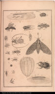 [Various insects]