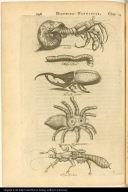 Soldat; Mille Pieds; Mouche Cornue; Araignée Monstrueuse; Tigre Volant