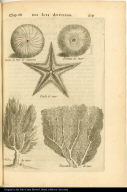 [Sea urchin, starfish, algae (?), and coral]