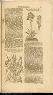 [bottom left] Americanische stachlichte Aloe ohne Blum. Aloë Americana spinosa sine flore. [upper right] Americanische blühende Aloe. Aloë Americana florens.