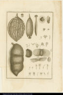 [Parts of the plants Mayna brasiliensis, Couratari estrellensis, Bertolonia, Schnella, Macroceratides, Catappa brasiliensis, and Matthissionia]