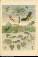 [Tadpole, frog, beetle, butterflies, caterpillar, chrysalises]