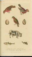 [Birds, shells, bull, and fish]