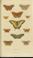 [Butterflies]