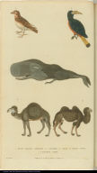 [Birds, whale, and camels]