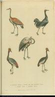 [Cranes]
