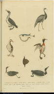 [Birds and fish]